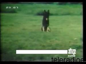 tv7pathe